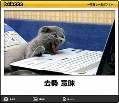 Animals And Pets, Funny Animals, Cute Animals, Funny Images, Funny Pictures, Japanese Funny, Smiling Cat, My Favorite Image, Polar Bear