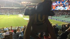 Get them young and get them for life! A very young Sydney FC fan is shown how to celebrate the only goal at last night's match before 11,148 people against Central Coast Mariners, bringing Sydney FC inexorably closer to the Premiers Plate. Photo by @fattialias 11.03.17