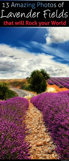 13 Amazing Photos of Lavender Fields that will Rock your World #Provence #France #Lavender