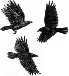 More crow tattoo inspiration - I like the two on the left.