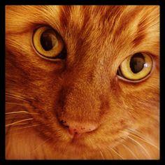 My cat Ollie