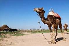 https://footprintsaroundtheworld.be/short-break-marrakesh/ #Marokko #marrakech #marrakesh #djemaa el fnaa #soeks
