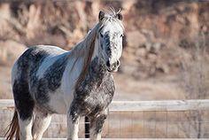 Wild Mustang, Wild Horse