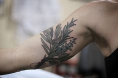 Elegant Rosemary Tattoo to Decorate Your Beautiful Body Nature Tattoos, Body Art Tattoos, Cool Tattoos, Tatoos, Botanisches Tattoo, Piercing Tattoo, Unalome Tattoo, Bicep Tattoo, Photomontage