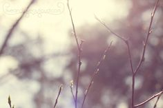 Beautiful and dreamy spring shot by @Kristi #photography