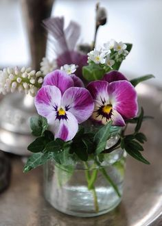 Tiny bouquet of pansies with a few white grape hyacinths