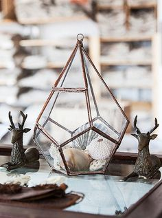 Another of Housley's collections—seashells plucked off beaches from Big Sur to Fire Island—resides in a terrarium made by a friend of hers, Ashley Bram-Johnson of ABJ Glassworks.