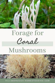 Edible Mushrooms, Wild Mushrooms, Stuffed Mushrooms, Mushroom Identification, Healty Dinner, Dry Well, Living Off The Land, Wild Edibles, Preserving Food