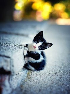 OH FOR HEAVEN'S SAKE-- THAT CURB IS BIGGER THAN THIS LIL BABY KITTEN……..HER MOMMA IS WALKING OVER - AS WE SPEAK - TO HELP HER BABY UP TO THE SIDEWALK…………..ccp