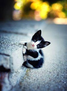 Sweet kitten - awww! <3