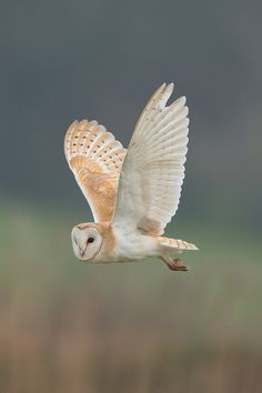 Excellent Snap Shots birds of prey feathers Ideas To be a wild birds associated with food photography, the most important concern many protest concerning will Owl Bird, Bird Art, Pet Birds, Beautiful Owl, Animals Beautiful, Beautiful Pictures, Animals And Pets, Cute Animals, Owl Pictures
