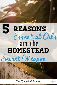 Why essential oils on the homestead are essential. Save time, money, resourses and stress with a few essential oils on hand. With answers for. Essential Oil Safety, Essential Oils For Colds, Bug Bite Relief, What To Use, Survival Tips, Survival Skills, Natural Health Tips, Grow Your Own Food, Sustainable Living