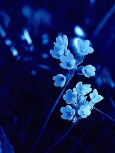 dark blue aesthetic Absolutely stunning flowers and love the blue tone. Blue Aesthetic Dark, Aesthetic Colors, Aesthetic Pictures, Image Bleu, Everything Is Blue, Blue Pictures, Blue Wallpapers, Dark Blue Wallpaper, Blue Tones