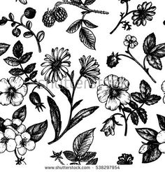 Image result for botanical drawings