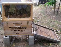 81 Best Bees Images Bees Bee Bee Skep
