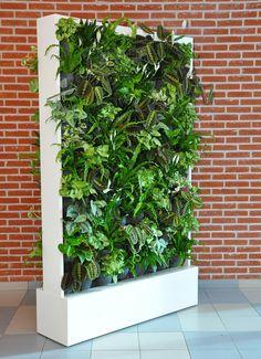 Plantenwand (met echte planten)