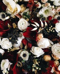 If this doesn't put you in the holiday spirit, then you're a real grinch. Flowers Nature, Beautiful Flowers, Beautiful Places, Bloom Where Youre Planted, Belle Plante, Winter Bouquet, Plants Are Friends, Pretty Pictures, Floral Wedding