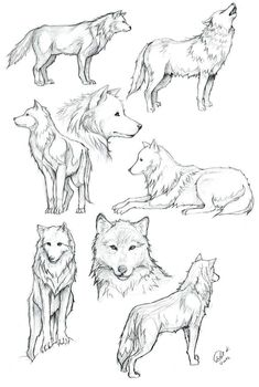 Wolves of Transylvania draw Wolf coloring … The post Wolves of Transylvania draw Wolf coloring … appeared first on Woman Casual - Drawing Ideas Wolf Sketch, Sketch Art, Drawing Sketches, Drawing Drawing, Anime Wolf Drawing, Wolf Drawing Easy, Tattoo Design Drawings, Art Drawings, Wolf Drawings