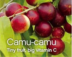 Camu Camu Is A Potent Source Of Vitamin C