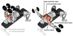 Dumbbell fly. Targets your upper pectoralis major. Your lower pectoralis major, anterior deltoid, and the short head of your biceps brachii act as synergists. Also known as the dumbbell chest fly.