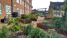 Planting Fruit Trees, Enjoy The Sunshine, Horticulture, Wild Flowers, Wildlife, Environment, Herbs, Board, Places