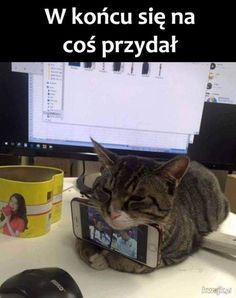 # funny cats # funny cats # funny sayings # funny sayings # cats # mobile phone holder Source Animals And Pets, Funny Animals, Cute Animals, Funny Friday Memes, Funny Jokes, Funny Minion, Funny Cat Pictures, Life Memes, I Love Cats