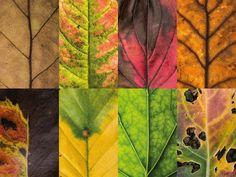 Fotógrafa alemã registra a beleza das folhas caídas no outono - Galileu | Meio Ambiente