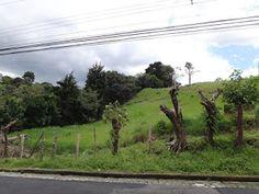 MPaniagua bienes raices: 0100085  Lote, Mata Plátano, Guadalupe, San José, ...