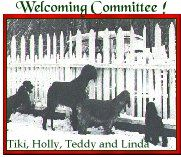 Tiki, Holly, Teddy and Linda -greeting guests!