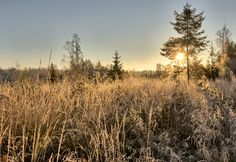 Very cold morning at meadow - Background image with frozen straws on the meadow in winter.