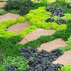 "Ground covers are a low-maintenance alternative—and complement—to grass. ""Because they're low to the ground and dense, they give a neat appearance with very little maintenance,"" says Winslow. ""They also allow you to introduce spring bulbs to your landscape, because the ground cover hides the dead leaves after the bulbs bloom."""
