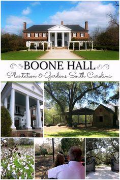 Boone Hall Plantation ~ located in Mount Pleasant, South Carolina. South Carolina Vacation, Charleston South Carolina, Charleston Sc, Mount Pleasant South Carolina, Boone Hall Plantation, Plantation Homes, Southern Plantations, Charleston Plantations, Mansion Tour