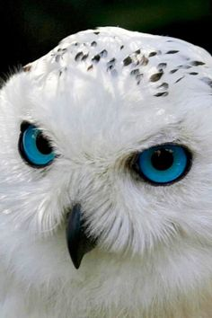 "Owl vision is quite unconventional. Their eyes are extremely large and nearly touch inside the head. Owl eyes are also completely immobile and cannot be considered true ""eyeballs,"" since they're actually tube-shaped."