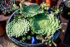 Who, What, Rare: Where to Find Hard-to-Find Succulents | The Horticult