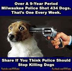 This needs to STOP - Animal Rights - Animal Cruelty - Milwaukee Police - dog shootings - dogs shot by Police .. is this why you guys hate me, don't be afraid of a dog then! i'm a white girl from the suburbs and i've been shark diving! how can a furball of love scare you?