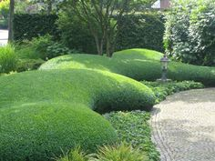 Plan your landscaping shrubs and plants well. Contemporary Garden Design, Modern Landscape Design, Landscape Plans, Garden Hedges, Topiary Garden, Boxwood Garden, Landscaping Shrubs, Modern Landscaping, Japan Garden