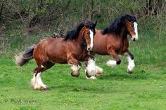 budweiser clydesdales | 10257487_706680392724296_7870004843127875896_o