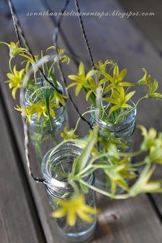 Pienet lasipurkit  Sonnihaan keltainen tupa Glass Vase, Plants, Home Decor, Decoration Home, Room Decor, Plant, Home Interior Design, Planets, Home Decoration