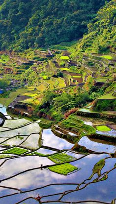 The two thousand years old Rice Terraces in Banaue (Philippines) are often referred as the wonder of the world. For an unforgettable trekking experience I suggest you to take a hike through the rice paddies. The scenery is out of this world, absolutel Voyage Philippines, Les Philippines, Philippines Travel, Philippines Destinations, Palawan, Places To Travel, Places To See, Travel Destinations, Asia Travel