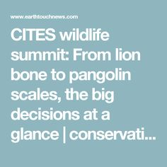 CITES wildlife summit: From lion bone to pangolin scales, the big decisions at a glance | conservation | Earth Touch News