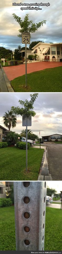 Tree growing in a speed limit sign