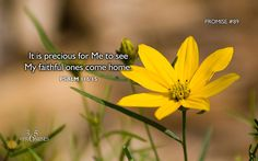 365 Promises - Daily Promise Blog