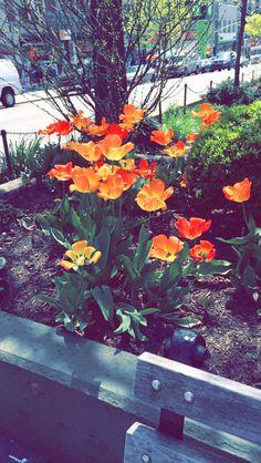 Flowers in bloom on broadway