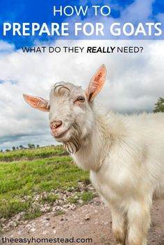 How to Prepare for Goats- What do the REALLY need? | The Easy Homestead (.com) A simple a straight-forward list of what you need before brining your new goats home.:
