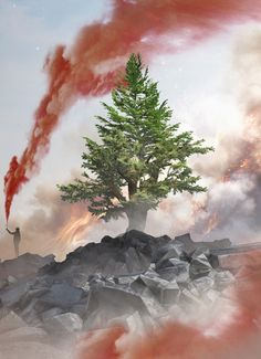 Nature Wallpaper, Wallpaper Backgrounds, Iran, Lebanon Culture, Lebanon Flag, Beirut Explosion, Aesthetic Collage, Pretty Wallpapers, Where The Heart Is