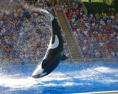 Sea World Orlando