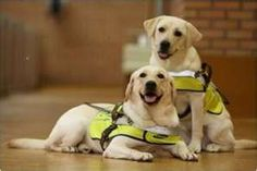 Samsung Guide Dogs
