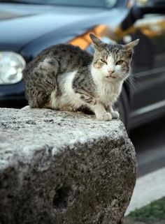 The best that stray cats can usually do is to eat from garbage cans ... #cats - Catsincare.com!