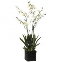 Gerald Orchids available at http://www.seniorfurnishings.com/