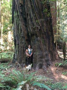 Redwood  Tree  fun  to Climb